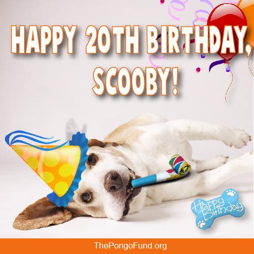 Happy 20th Birthday, Scooby