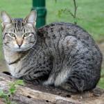 Cat 42_a25de8361871b1b6334c07f75235b621