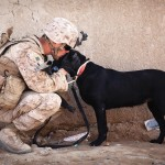 Memorial Day Dog and Soldier--FB 5-24-15