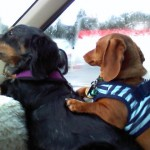 Sparky and Ginger2