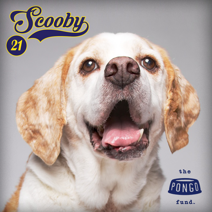 Happy 21st Birthday To Scooby King Of The Beagles The Pongo Fund